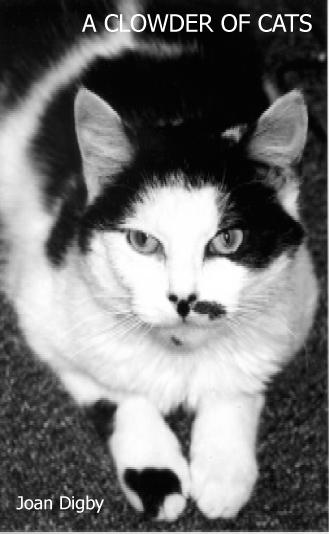 Clowderofcats
